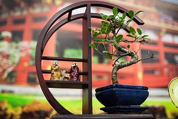 bonsai japonés