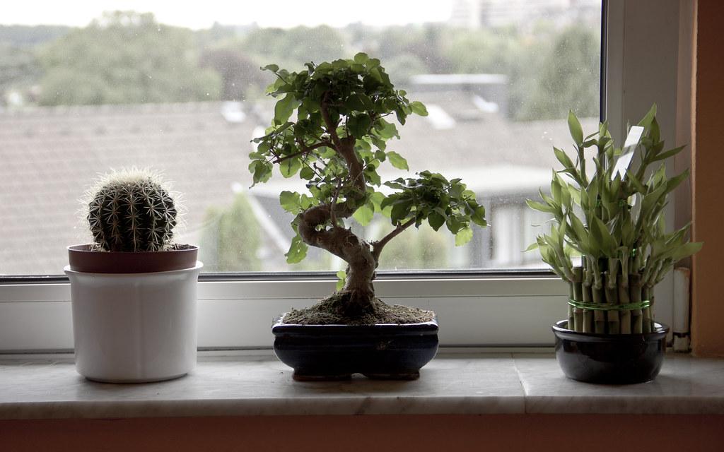 bonsái, cactus y bambú al lado de una ventana