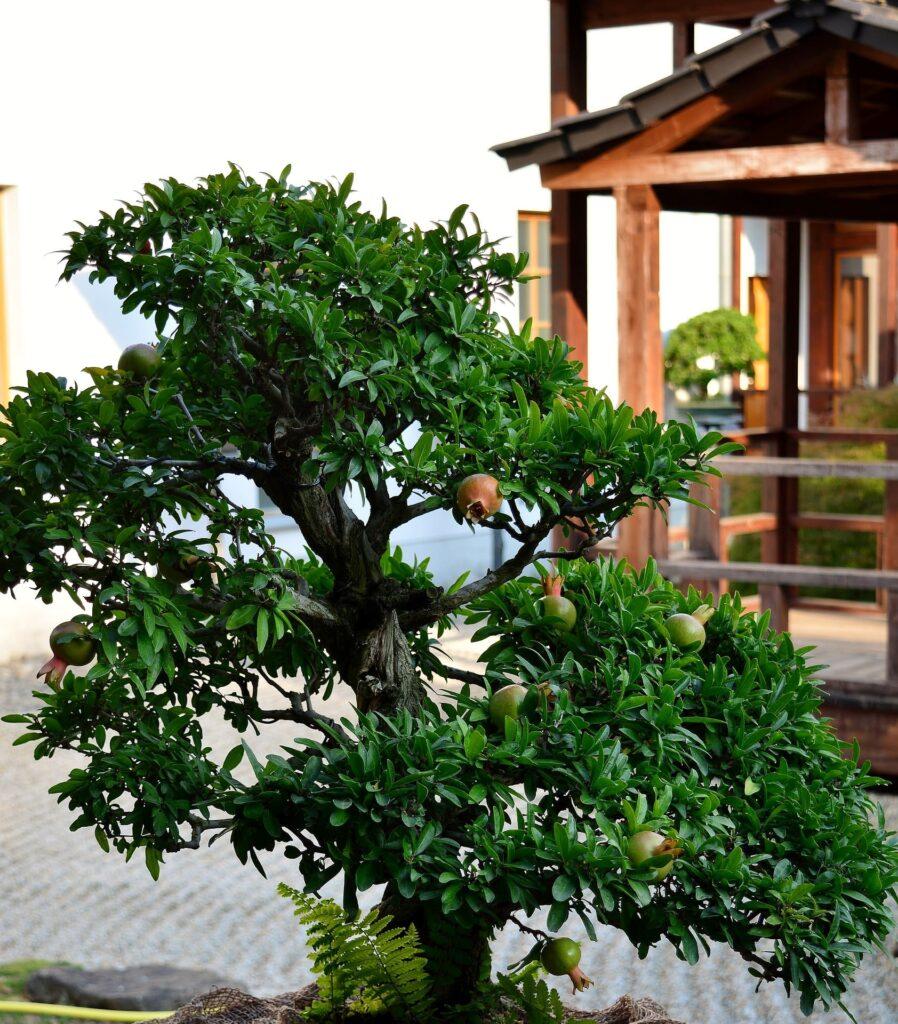 bonsai grandado espectacular