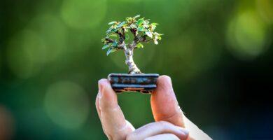 bonsai shito