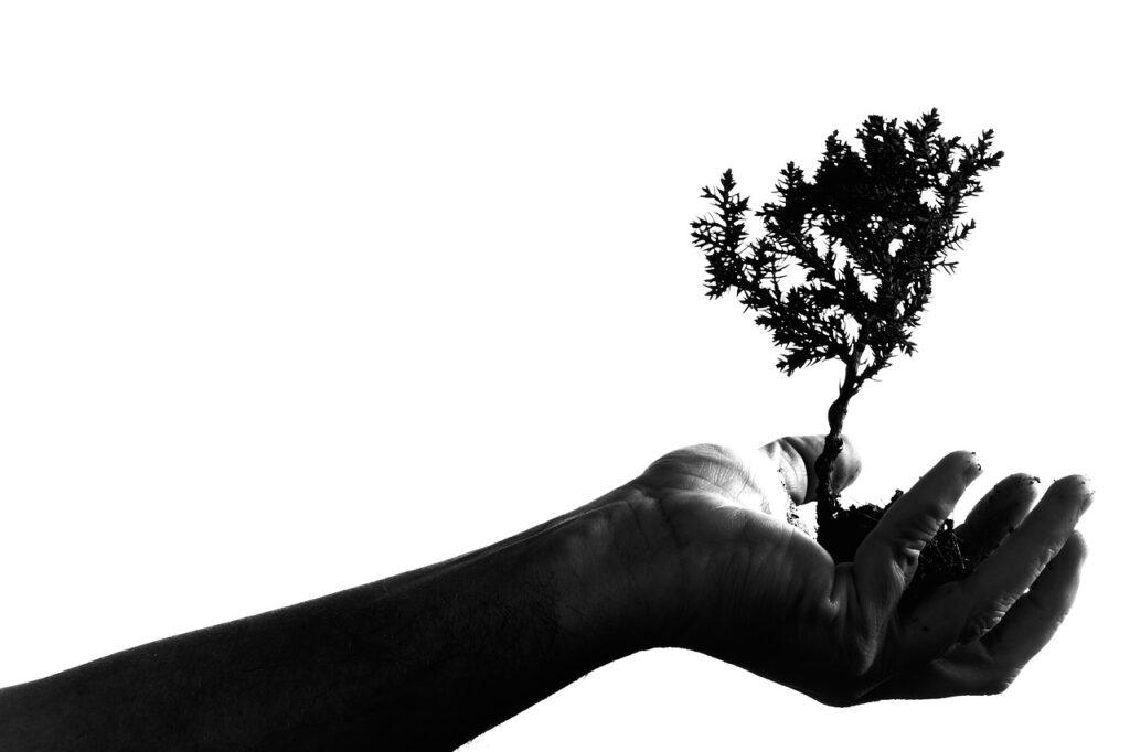 bonsai fuera de su maceta sujeto por una mano