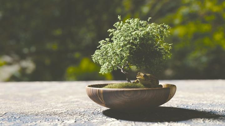 bonsái pequeño con una rana de decoración