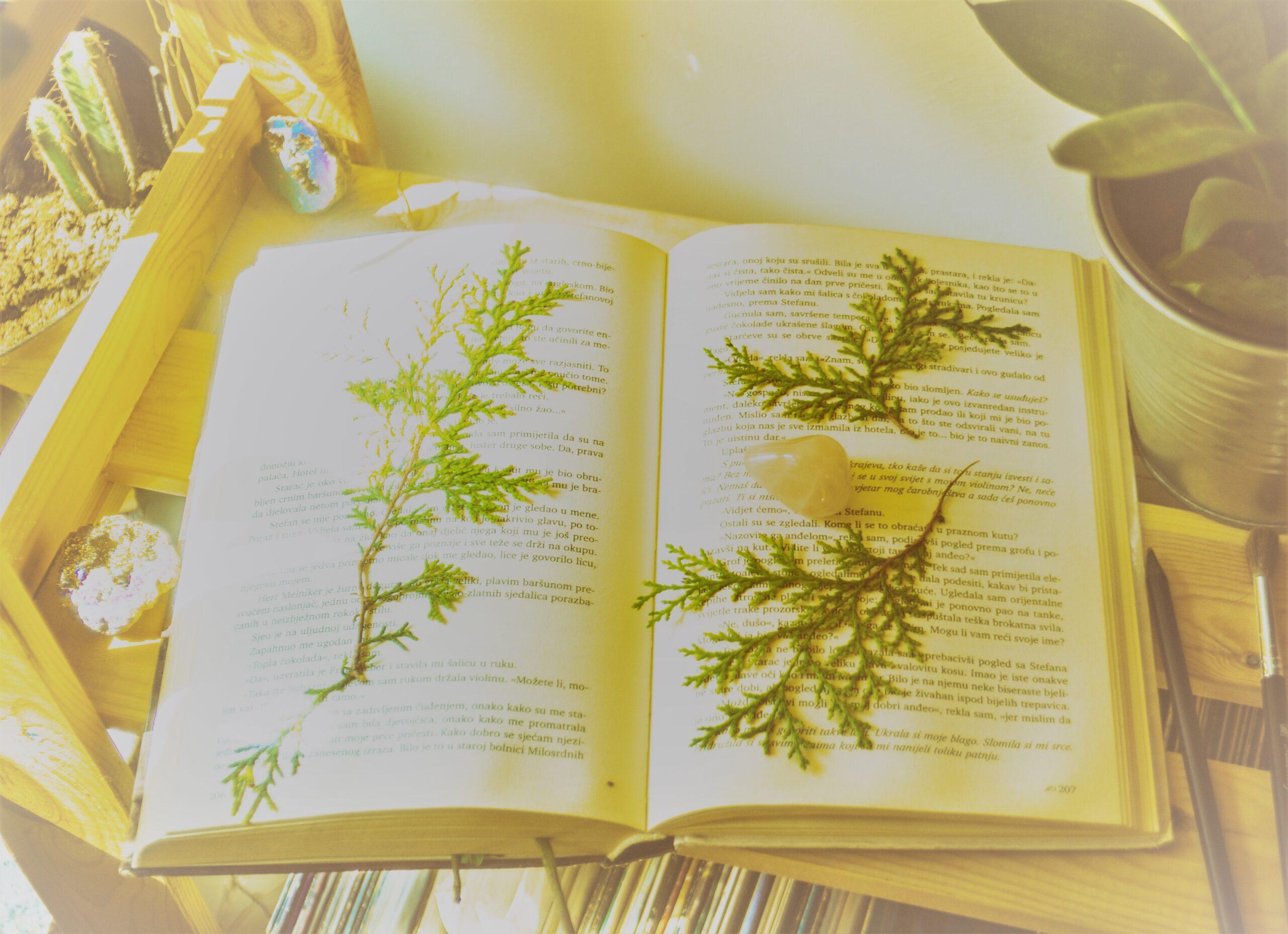 regalo para amantes del bonsai