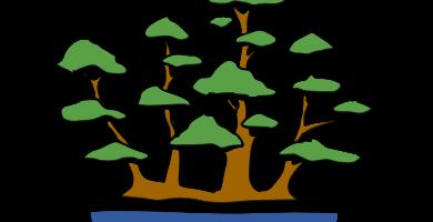 bonsai estilo balsa