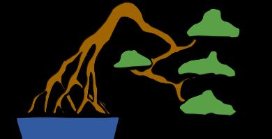 bonsai estilo raices expuestas