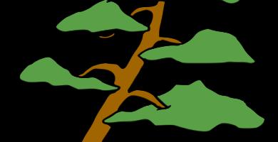 bonsai inclinado por el viento