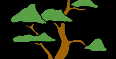bonsai sokan padre e hijo