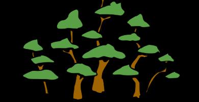 bonsai estilo bose frondoso