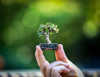 bonsa chokkan