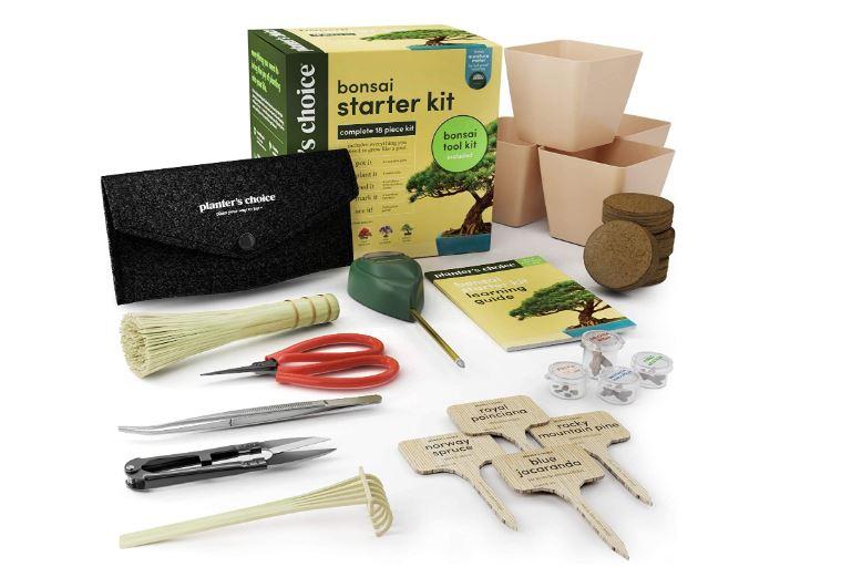 kit para principiantes en el mundo del bonsai para principiantes