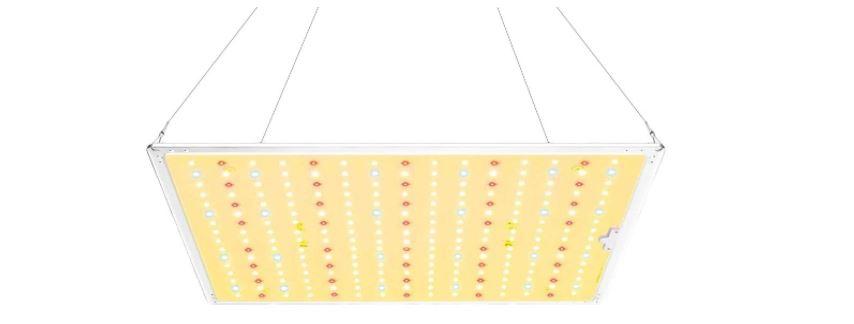 iluminación artificial para bonsais