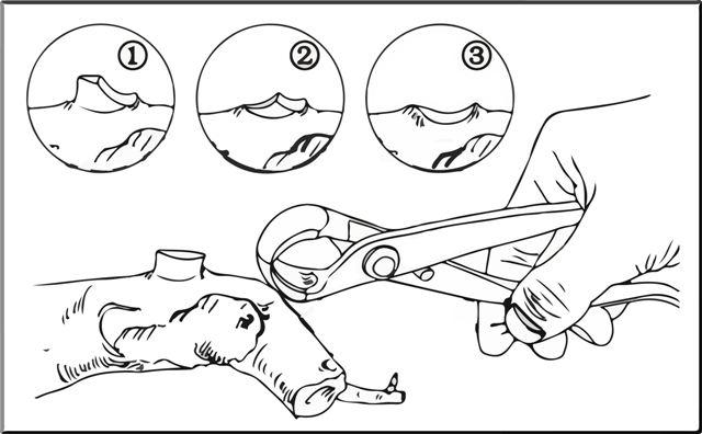 Como utilizar una podadora esférica para bonsáis